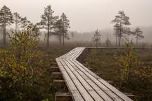 Morning Walk In Foggy Swamp, V...