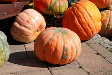 Colorful Orange, Yellow And White Pumpkin Squashes And Gourds At A Farmers Market In The Fall