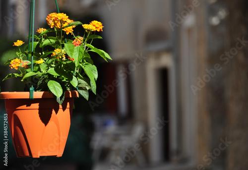 Fotografija Pflanze am Balkon