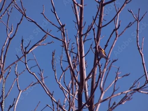 ptak zwierze natura dziki fauna - fototapety na wymiar
