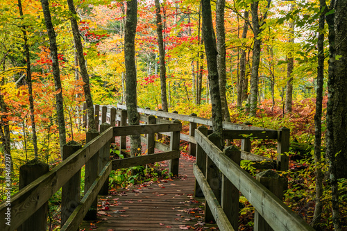 Scenic board walk in Presque Isle state park surrounded by fall foliage in Michi Canvas Print