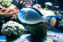 Fish, Aquarium.