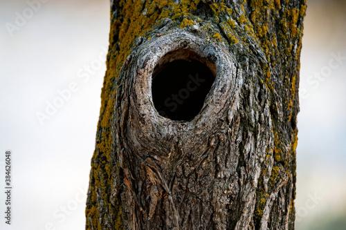 Valokuvatapetti Close-up of black bottomless hollow in an autumn tree