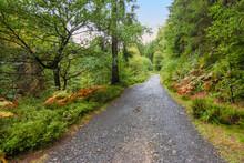 Walking Path Through The Beaut...