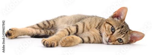Foto Small brown kitten.