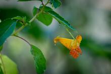 Close Up Of A Fiery Orange Blo...