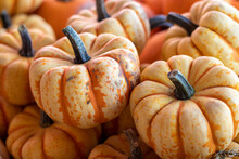 Angle View Of Farmers Market Group Of Two Tone Orange Small Pumpkins . High Quality Photo