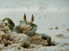 Crabe Faisant Un Trou Dans Le Sable