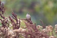A Sparrow Resting On A Bush