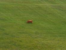 Remote Shot Of Scottish Highla...