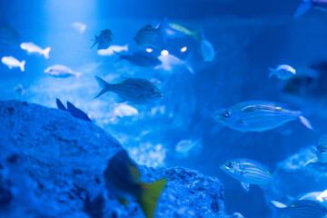 Fototapeta na wymiar 魚の群れ