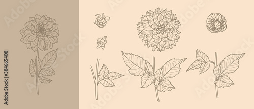 Canvas Print Set Dahlia Flowers with Leaves in Trendy Minimal Liner Style