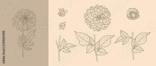 Fényképezés Set Dahlia Flowers with Leaves in Trendy Minimal Liner Style