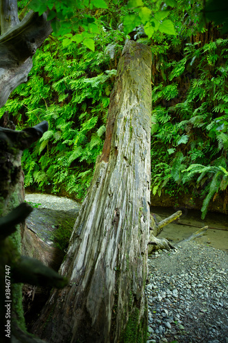 Fotomural Fallen tree trunk spans across a canyon growing with moss and ferns