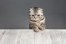 Cat Looking Over Gray Wooden B...