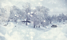 Winter Forest Landscape. Tall ...
