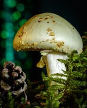 Magic Toad Stool Mushroom In D...