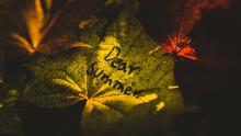 Dear Summer. Autumn