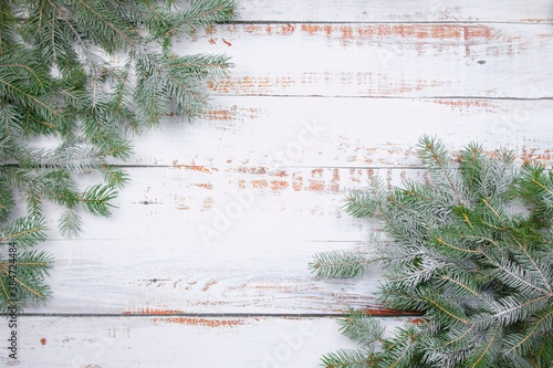 Coniferous spruce branches  with snow on white abraded boards Canvas Print
