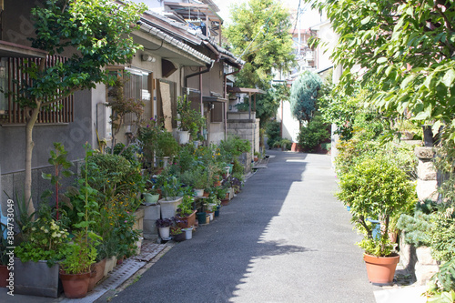 住宅街の路地に置かれたたくさんの植木鉢 Tapéta, Fotótapéta