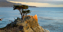 View From The 17 Mile Drive , California , USA