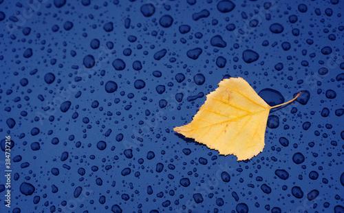 Obraz Autumn background with a leaf on the wet car hood - fototapety do salonu
