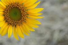 Sunflower In Half Composition ...