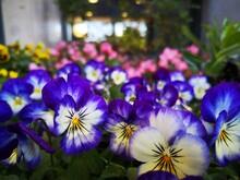 Flores De Jardines De Madrid,E...