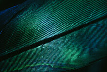 Close Up Beautiful GREEN Bird Feather Background Pattern Texture For Design. Macro Photography View..