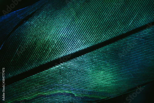 Photo Close up Beautiful GREEN Bird feather background pattern texture for design