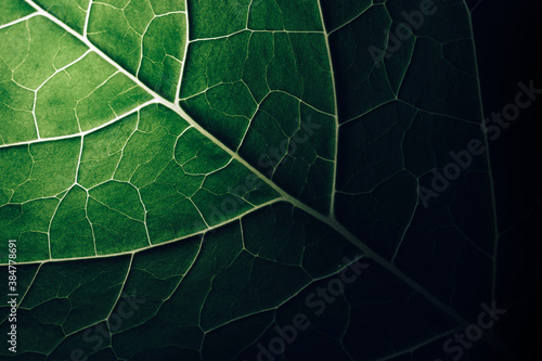 Close up beautiful green leaf background texture Wallpaper Mural