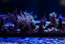 Corals Getting Propagated By F...