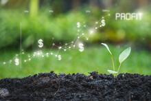 Planting Seedling Growing Step...