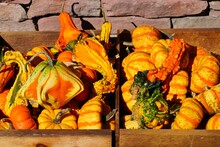 Colorful Orange And Green Decorative Mini Pumpkins And Gourds In The Fall