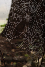 Spiders Web Covered In Morning...