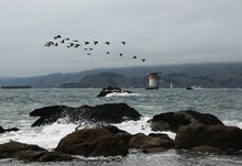 Waves, Lighthouse, Birds And R...