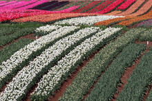 Beautiful Stripes Of Color At ...