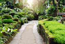 Walkway Path In Garden Freshne...