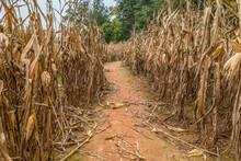 Corn Maze Trail In A Field