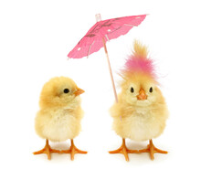 Two Chicks One Crazy Chick With Weird Pink Hair And Paper Parasol Umbrella