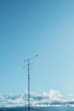 Bird And Antenna
