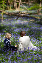 Sitting In A Meadow Of Bluebells.