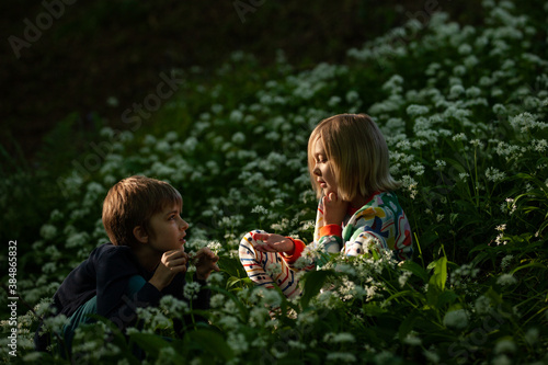 Two children play in a beautiful meadow of wild garlic. - 384865832