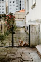 Dog Behind A Gate