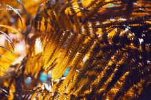 Autumn Fern Leaves Close-up. B...