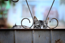 Olhar Penetrante De Um Gato Em...