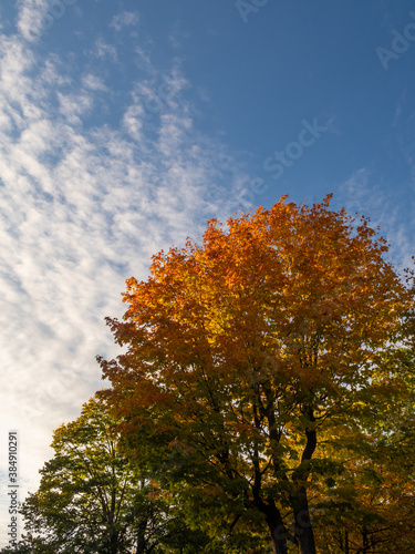 Autumnal view of a colorful tree in a park
