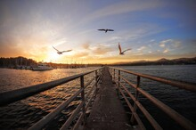Three Seagulls In Flight Looking Parallel To A Dock With The Sunset And Marina On The Left