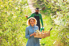 A Pair Of Farms Carries Boxes With Vegetables And Greens Along The Field. Portrait Of A Young Happy Couple In Yard During Spring Season.