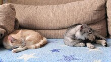 Two Cats Are Lying On The Sofa Dozing. Pets